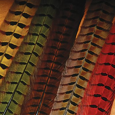Ringneck Pheasant Tail Feathers